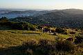 Wellington from Mt Kaukau - Flickr - asgw.jpg