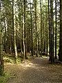 Whinlatter Woods - geograph.org.uk - 511342.jpg