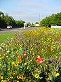 Wildflowers on traffic island - geograph.org.uk - 411198.jpg