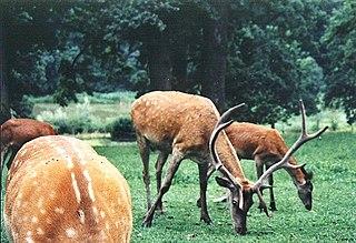 Vânători-Neamț Natural Park