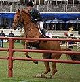 William Whitaker Glenavadra Brilliant - Deutsches Spring-Derby 2013.JPG