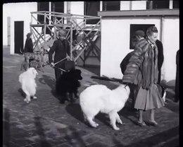 Bestand:Winnertentoonstelling voor honden 1948.webm