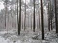 Winter op de veluwe (32703926262).jpg