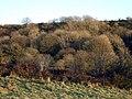 Winter trees, Cwm Gwyn - geograph.org.uk - 1079529.jpg