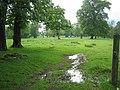 Woburn deer park footpath - geograph.org.uk - 436193.jpg