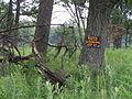 Wooded edges of the prairie P7150019.JPG