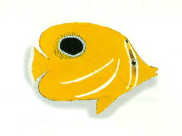 XRF-Chaetodon bennetti.png