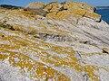 Xanthoria parietina.012 - Islas Cies.JPG