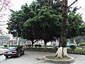 Xinhui 新會 Gangzhou Dadaozhong 岡州大道中 tree outdoor carpark April-2012.JPG