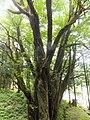 Yatsuomachi Odamou, Toyama, Toyama Prefecture 939-2455, Japan - panoramio (1).jpg
