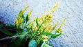 Yellow Flower Angle.jpg