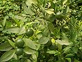 Yiling-District-Grapefruits-4881.jpg