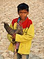 Young Boy with Fighting Cock - Jotisampur Village - Sundarban District - South of Kolkota - India - 02 (12346473153).jpg