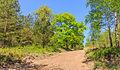 Zandpad. Locatie, Kroondomein Het Loo 02.jpg