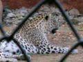 Zoo 085.jpg