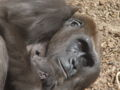 Zoo hannover 10.JPG