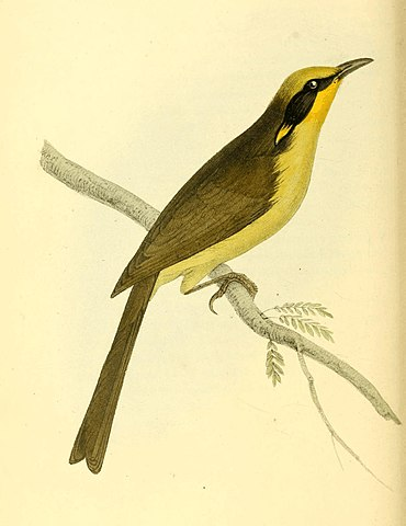 Zoological Illustrations Volume I Plate 43.jpg