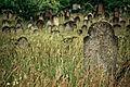 Zsidó temető (3670. számú műemlék) 3.jpg