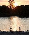 (1)Centennial Park sunset-5aa.jpg