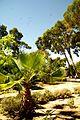 ® ┼ M.D. EL CAMPELLO VILLA MARCO JARDÍN - panoramio (18).jpg