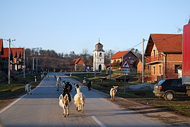 Čeralije in winter 2009 (3).JPG