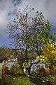 Žampach, strom v arboretu.jpg