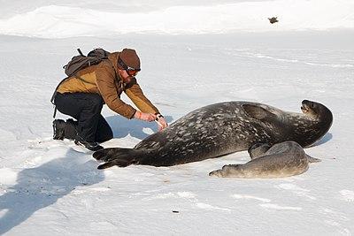 Антарктика 2020 02.jpg
