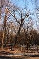 Ботанічний сад Національного аграрного університету 11.jpg