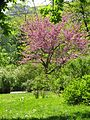 Ботанічний сад ім. І.Фоміна IMG 7407.jpg