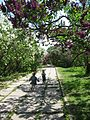 Ботанічний сад ім. М.Гришка IMG 7309.jpg