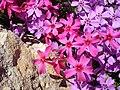 Весна в ботанічному саду ТНУ імені В. І. Вернадського.jpg