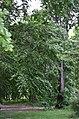 Восточная часть парка Нивки. Фото 22.jpg