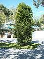Декоративный кордон из дерева.jpg
