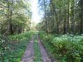 Дорога-The forest road - panoramio.jpg