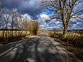 Дорога з села Розсоша.jpg