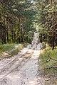 Дорога с широкой колеёй (2010.07.03) - panoramio.jpg