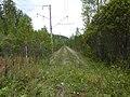 Заброшенная железная дорога в Солнечный - panoramio.jpg