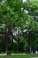 Западная часть парка Нивки. Фото 8.jpg