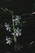 Квіти в балках.jpg