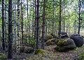 Лес валунов.jpg