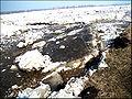 Лёд ест берега.jpg