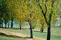 Минск, Листопад в августе. - panoramio.jpg