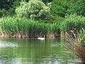 Озеро Баластне біля селища Бузьке.jpg