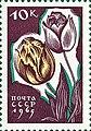 Почтовая марка СССР № 3196. 1965. Цветы.jpg