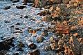 Прибережний аквальний комплекс біля Херсонесу Таврійського 2.jpg