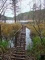 Приозерский район. Озеро Дубовое. - panoramio.jpg