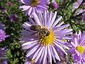 Пчела на цветке.jpg