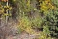 Чапля DSC 0391.jpg