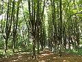 Шарівський дендропарк 1.jpg