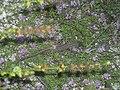 Ящерица в Валуйском районе.jpg